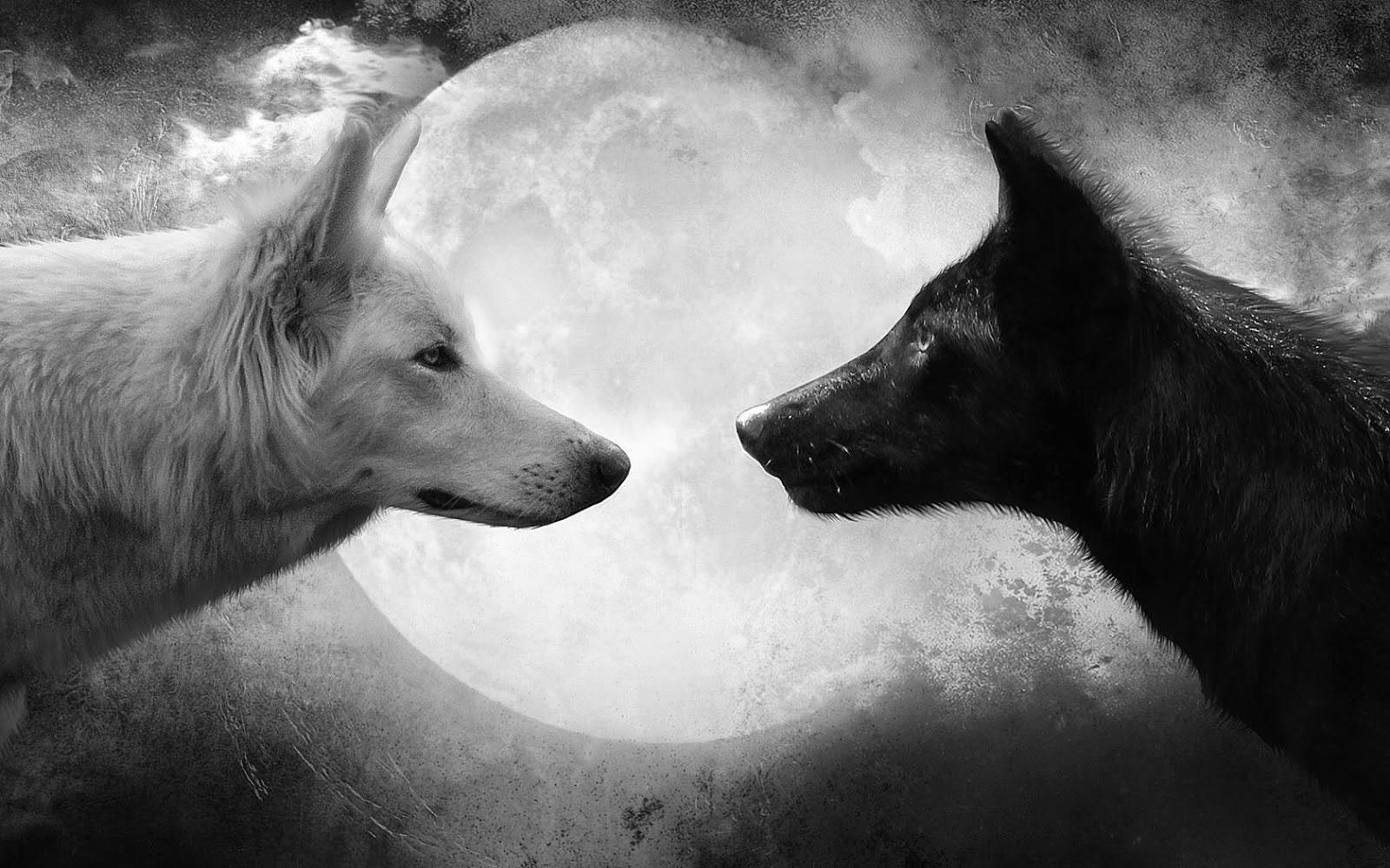 maanwolf