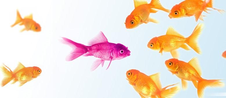 hspfish