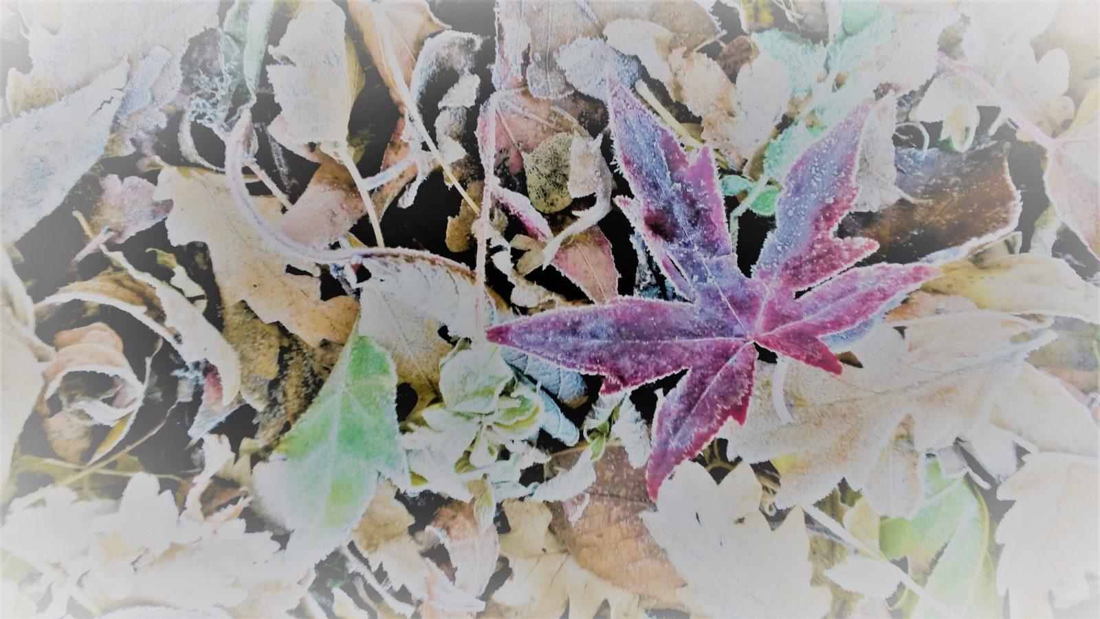 winterblatt2