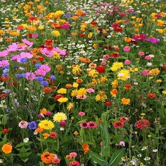 groeipapier-a6-kaarten-met-een-mix-van-wilde-bloem